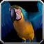 pet_parrot.png